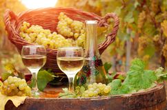 άσπρο κρασί αμπελώνων στοκ εικόνα
