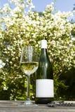 άσπρο κρασί κήπων Στοκ Εικόνες