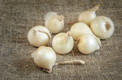 Άσπρο κρεμμύδι σε μια πετσέτα burlap Στοκ Εικόνες