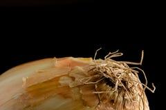 Άσπρο κρεμμύδι στο Μαύρο Στοκ εικόνες με δικαίωμα ελεύθερης χρήσης