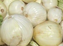Άσπρο κρεμμύδι στοκ εικόνα με δικαίωμα ελεύθερης χρήσης
