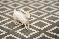 Άσπρο λαγουδάκι σε ένα της υφής υπόβαθρο ενός τάπητα με ένα γεωμετρικό σχέδιο Έννοια Πάσχας, τρυφερότητα, μοναδικότητα, ομορφιά Λ στοκ φωτογραφία