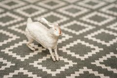 Άσπρο λαγουδάκι σε ένα της υφής υπόβαθρο ενός τάπητα με ένα γεωμετρικό σχέδιο Έννοια Πάσχας, τρυφερότητα, μοναδικότητα, ομορφιά Λ στοκ εικόνες