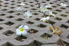 Άσπρο λουλούδι αφορημένος το έδαφος Στοκ φωτογραφία με δικαίωμα ελεύθερης χρήσης