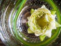 Άσπρο λουλούδι λωτού που επιπλέει στο στρογγυλό κύπελλο γυαλιού Στοκ Εικόνα