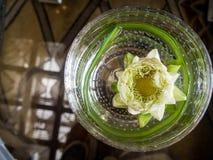 Άσπρο λουλούδι λωτού που επιπλέει στο στρογγυλό κύπελλο γυαλιού Στοκ φωτογραφία με δικαίωμα ελεύθερης χρήσης