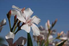 Άσπρο λουλούδι - ορχιδέα στοκ εικόνες με δικαίωμα ελεύθερης χρήσης