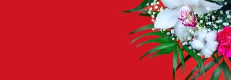 Άσπρο λουλούδι ορχιδεών στο κόκκινο υπόβαθρο στοκ εικόνα