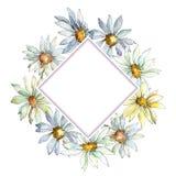 Άσπρο λουλούδι της Daisy Floral βοτανικό λουλούδι Τετράγωνο διακοσμήσεων συνόρων πλαισίων Στοκ φωτογραφία με δικαίωμα ελεύθερης χρήσης