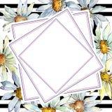 Άσπρο λουλούδι της Daisy Floral βοτανικό λουλούδι Τετράγωνο διακοσμήσεων συνόρων πλαισίων Στοκ εικόνες με δικαίωμα ελεύθερης χρήσης