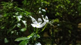 Άσπρο λουλούδι τη νύχτα Στοκ εικόνες με δικαίωμα ελεύθερης χρήσης
