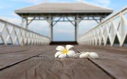 Άσπρο λουλούδι frangipani, λουλούδι plumeria στην ξύλινη γέφυρα Στοκ Εικόνες