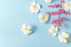 Άσπρο λουλούδι plumeria και ρόδινο λουλούδι αναρριχητικών φυτών Στοκ Εικόνες
