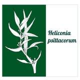 Άσπρο λουλούδι Vectonic ενός τροπικού psittacorum Heliconia εγκαταστάσεων διανυσματική απεικόνιση