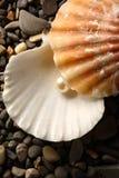 Άσπρο μαργαριτάρι στο θαλασσινό κοχύλι Στοκ Φωτογραφίες