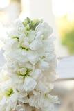 Άσπρο λουλούδι αποθεμάτων με τα πράσινα φύλλα Στοκ φωτογραφίες με δικαίωμα ελεύθερης χρήσης