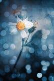 Άσπρο λουλούδι και bokeh φως ρ Στοκ Φωτογραφίες