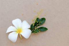 Άσπρο λουλούδι ρυζιού Plumeria ή Frangipani τροπικό και κίτρινο κινεζικό Στοκ Φωτογραφίες