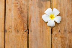 Άσπρο λουλούδι στο ξύλινο υπόβαθρο Στοκ εικόνες με δικαίωμα ελεύθερης χρήσης