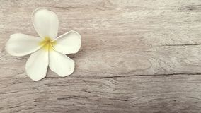 Άσπρο λουλούδι στο παλαιό ξύλινο υπόβαθρο Στοκ φωτογραφία με δικαίωμα ελεύθερης χρήσης