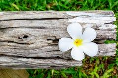 Άσπρο λουλούδι στο παλαιό ξύλο Στοκ Φωτογραφίες