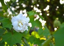 Άσπρο λουλούδι στο πράσινο φυσικό υπόβαθρο Στοκ φωτογραφία με δικαίωμα ελεύθερης χρήσης