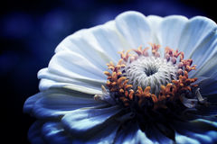 Άσπρο λουλούδι το βράδυ στοκ φωτογραφία