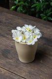 Άσπρο λουλούδι Στοκ εικόνα με δικαίωμα ελεύθερης χρήσης
