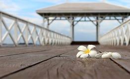 Άσπρο λουλούδι frangipani, λουλούδι plumeria στην ξύλινη γέφυρα Στοκ εικόνα με δικαίωμα ελεύθερης χρήσης