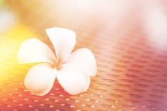 Άσπρο λουλούδι, plumeria λουλουδιών κλασικός ελαφρύς τόνος χρώματος διαρροών εκλεκτής ποιότητας όμορφος Στοκ φωτογραφία με δικαίωμα ελεύθερης χρήσης
