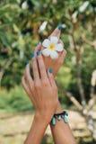 Άσπρο λουλούδι plumeria σε διαθεσιμότητα με ένα τυρκουάζ βραχιόλι Στοκ φωτογραφίες με δικαίωμα ελεύθερης χρήσης
