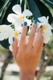Άσπρο λουλούδι plumeria σε διαθεσιμότητα με ένα τυρκουάζ βραχιόλι Στοκ Εικόνες