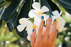 Άσπρο λουλούδι plumeria σε διαθεσιμότητα με ένα τυρκουάζ βραχιόλι Στοκ φωτογραφία με δικαίωμα ελεύθερης χρήσης