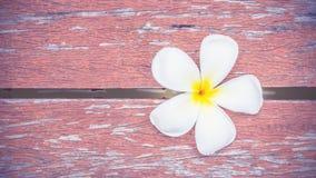 Άσπρο λουλούδι Plumeria στο ξύλινο πάτωμα Στοκ Εικόνα