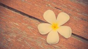 Άσπρο λουλούδι Plumeria στο ξύλινο πάτωμα Στοκ φωτογραφία με δικαίωμα ελεύθερης χρήσης