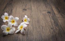 Άσπρο λουλούδι plumeria στο ξύλινο υπόβαθρο Στοκ Φωτογραφίες