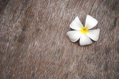 Άσπρο λουλούδι plumeria στο ξύλο grunge Στοκ Φωτογραφία