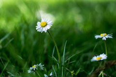 Άσπρο πάρκο λουλουδιών Στοκ Εικόνα