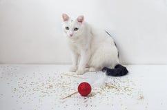 Άσπρο παιχνίδι γατών με την κόκκινη σφαίρα Στοκ Εικόνες