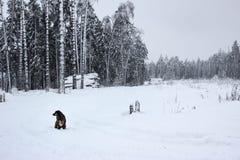Άσπρο παραμύθι - χειμερινά δασικά τοπίο και σκυλί στοκ εικόνα με δικαίωμα ελεύθερης χρήσης