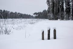 Άσπρο παραμύθι - χειμερινά δασικά τοπίο και χιόνι - 4 στοκ εικόνα