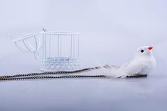 Άσπρο περιστέρι στο κλουβί, περιστέρι που κλειδώνεται σε ένα κλουβί Στοκ Φωτογραφία