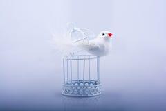Άσπρο περιστέρι στο κλουβί, περιστέρι που κλειδώνεται σε ένα κλουβί Στοκ φωτογραφία με δικαίωμα ελεύθερης χρήσης