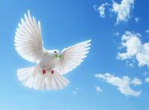 Άσπρο περιστέρι στο μπλε ουρανό στοκ εικόνα με δικαίωμα ελεύθερης χρήσης