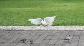 Άσπρο πουλί στο πάρκο Suropati, Τζακάρτα Στοκ Εικόνες