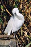 Άσπρο πουλί στο πάρκο στη Βαλένθια, Ισπανία στοκ εικόνες