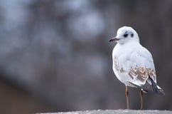Άσπρο πουλί Στοκ Εικόνες