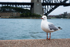 Άσπρο πουλί Στοκ εικόνες με δικαίωμα ελεύθερης χρήσης