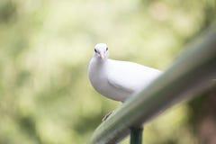 Άσπρο πουλί Στοκ Εικόνα