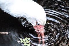 Άσπρο πουλί Στοκ φωτογραφία με δικαίωμα ελεύθερης χρήσης